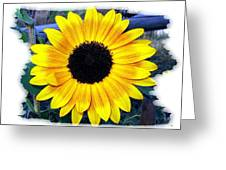 Back Forty Sunflower Greeting Card
