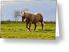 Back Light Horse Greeting Card