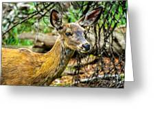 Back-tail Doe Greeting Card