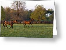 Back To The Barn Greeting Card