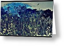 Back Yard Sky Greeting Card
