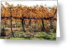Backlit Autumn Vineyard Greeting Card