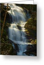 Backlit Buttermilk Greeting Card by Mark Robert Rogers