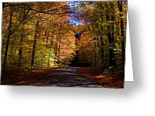 Backlit Canopy Greeting Card