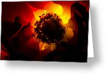 Backlit Flower Greeting Card by Fabrizio Troiani