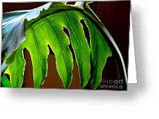 Backlit Frond Greeting Card