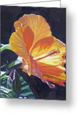 Backlit Hibiscus Greeting Card