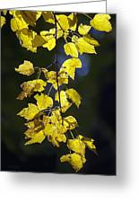 Backlit Leaves Of Autumn Greeting Card