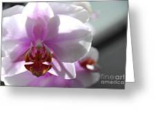 Backlit Orchid Greeting Card