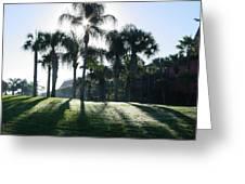 Backlit Palms Greeting Card