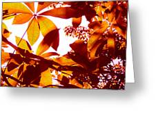 Backlit Tree Leaves 2 Greeting Card