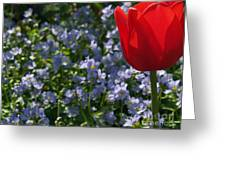 Backlit Tulip And Jacob's Ladder Greeting Card