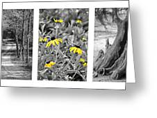 Backwoods Escape Triptych Greeting Card