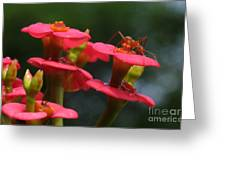 Backyard Beauties Greeting Card
