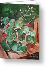 Backyard Begonia Greeting Card