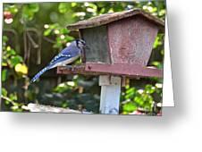 Backyard Bird Feeder Greeting Card