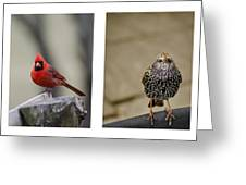 Backyard Bird Series Greeting Card