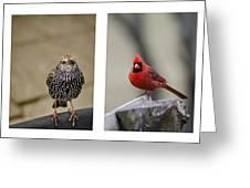 Backyard Bird Set Greeting Card