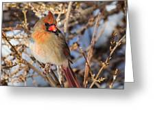 Backyard Birds Female Nothern Cardinal Square Greeting Card