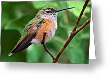 Backyard Broad Tailed Hummingbird Greeting Card