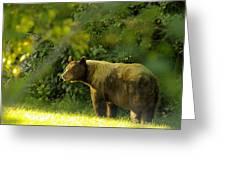 Backyard Bruin Greeting Card