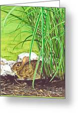 Backyard Bunny Greeting Card