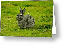 Backyard Bunny In Black White And Green Greeting Card