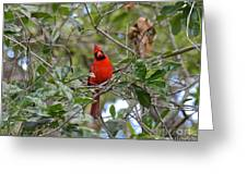 Backyard Cardinal In Tree Greeting Card