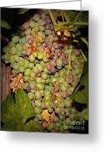 Backyard Garden Series -hidden Grape Cluster Greeting Card
