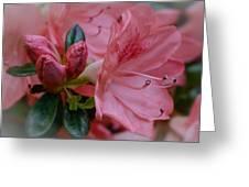Backyard Glamor Greeting Card