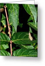 Backyard Hopper Greeting Card