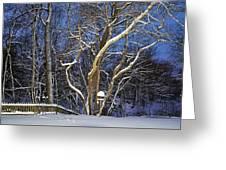 Backyard Trees Greeting Card