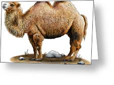 Bactrian Camel Greeting Card