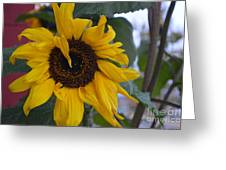 Bad Petal Day  Greeting Card