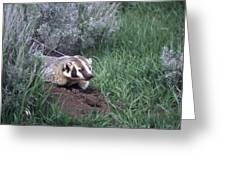 Badger In Yellowstone Greeting Card
