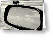 Badlands Bison Climbs Colossal Car Greeting Card