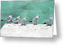 Bahama Birds Greeting Card