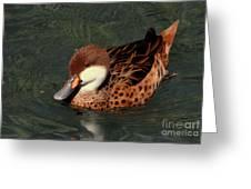 Bahama Pintail Duck Greeting Card