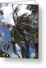 Bahamas Sky Greeting Card