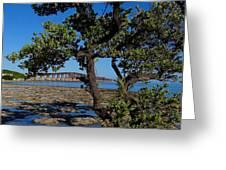 Bahia Honda Rail Bridge And Tree Greeting Card