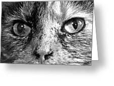 Bailey 1 Black And White Greeting Card