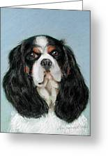 Bailey The Cavalier King Charles Spaniel Greeting Card