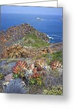 Baja California Coast Greeting Card
