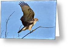 Balancing Act Greeting Card