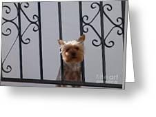 Balcony Dog Greeting Card