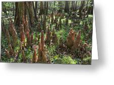 Bald Cypress Knees In Congaree National Park Greeting Card