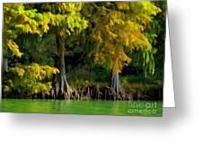 Bald Cypress Trees 1 - Digital Effect Greeting Card