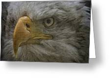 Bald Eagle 26 Greeting Card