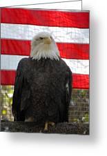Bald Eagle 265 Greeting Card by Joyce StJames