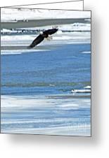 Bald Eagle 2832 Greeting Card